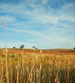 Australian landscape image by leagun
