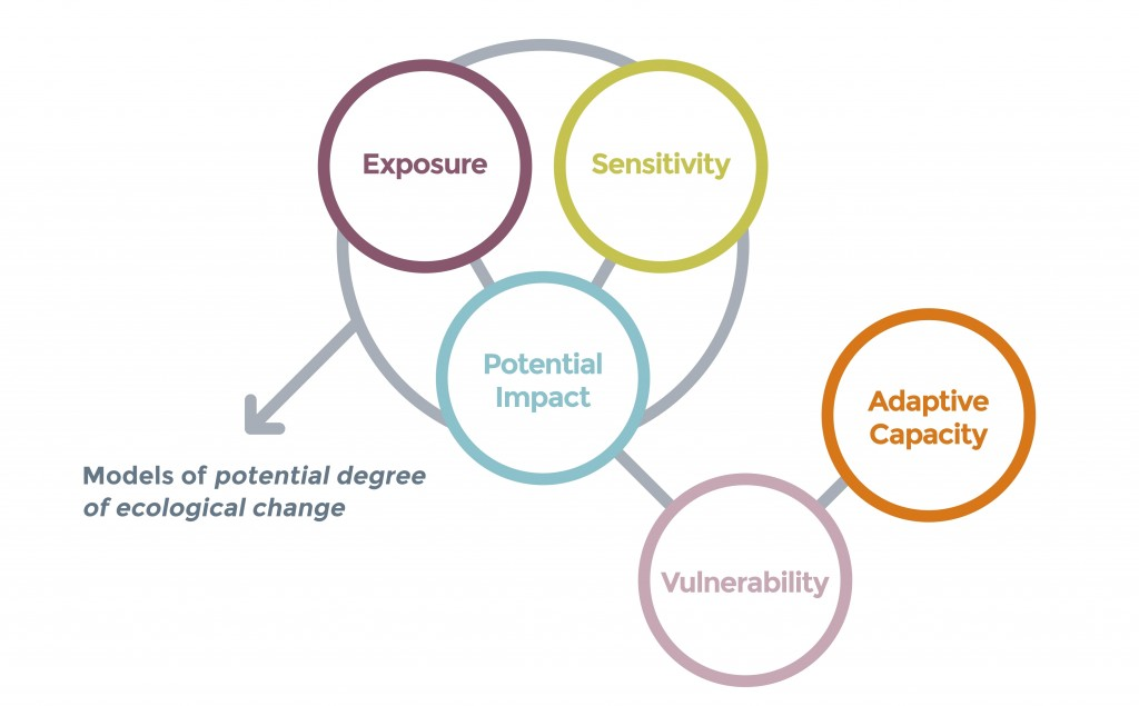 The general structure of vulnerability analyses, showing that models of potential degree of ecological change can be used as the 'potential impact' layer - a synthesis of climate exposure and sensitivity. Other threats may be incorporated as reductions to adaptive capacity.