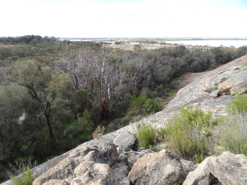 The eastern-most population of Jarrah (Eucalyptus marginata), at Jilakin Rock in the wheatbelt of Western Australia showing tree deaths, but also pockets of survival in certain microclimates. Image: Suzanne Prober.