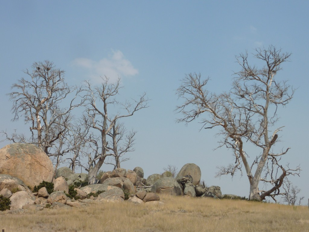 A typical vista of dead trees in the Monaro; Source: Tim the Yowie Man