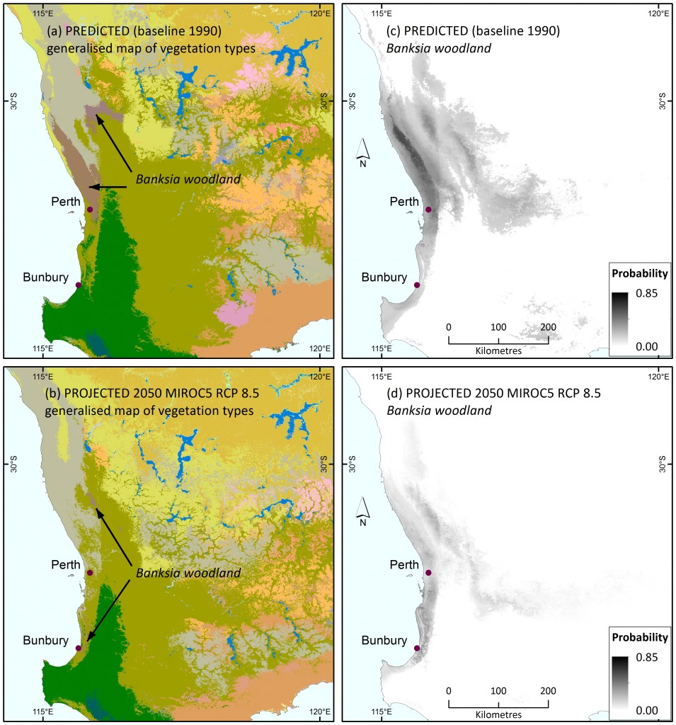 Colour maps show generalised mapping of predicted major vegetation subgroups for baseline climates in south-western Australia (a), and projected under the 2050 mild MIROC5 climate scenario (b). See Figure 2 for legend to vegetation classes; Banksia woodlands are pinkish-brown. Grey scale maps show the predicted probability of Banksia woodland occurrence for baseline (1990) climates (c), and projected under the 2050 mild MIROC5 climate scenario (d).