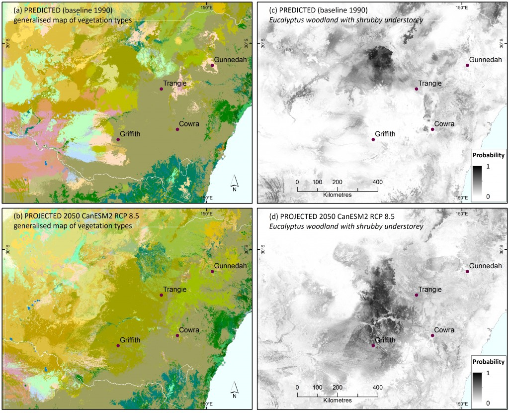 The colour maps show baseline (1990) observed (a) and 2050 projected (b) vegetation classes for central NSW, showing potential replacement of Eucalyptus woodland with grassy understorey (grey-green) with Eucalyptus woodland with shrubby understorey (olive green) under the hot CanESM2 climate scenario (full legend is shown in Figure 2). The grey scale images show the 1990 baseline predicted (c) and 2050 projected (d) probabilities for Eucalyptus woodland with shrubby understorey, highlighting the potential southward spread. The probability maps also indicate uncertainties, such as low probabilities for shrub woodland around Trangie despite its projection as the most probable vegetation class on the generalised map